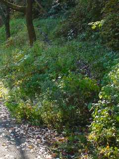 写真:右へ登っていく微かな踏み分けが、旧旧隧道西側坑口へ続く道です。
