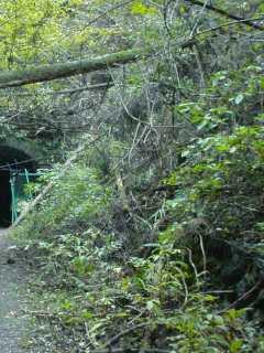 写真:西側坑口遠景。こちらにも石垣と思われる構造を確認できます