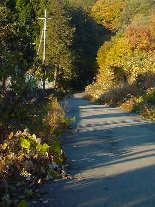写真:飯能側坑口へ続く道(2)