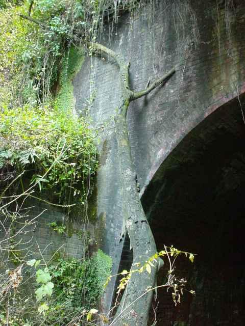 写真:青梅側坑口に落下したままの樹木